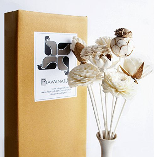 Exotic Plawanature Set of 8 Mixed Sola Wood Flower with Reed Diffuser for Home Fragrance Aroma Oil